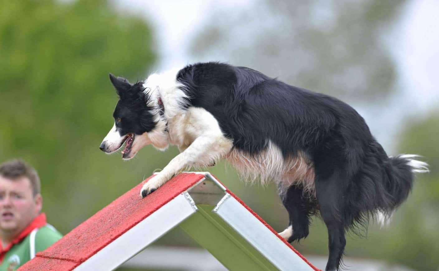Instructors Gallery – Glen-Craig Canine Training